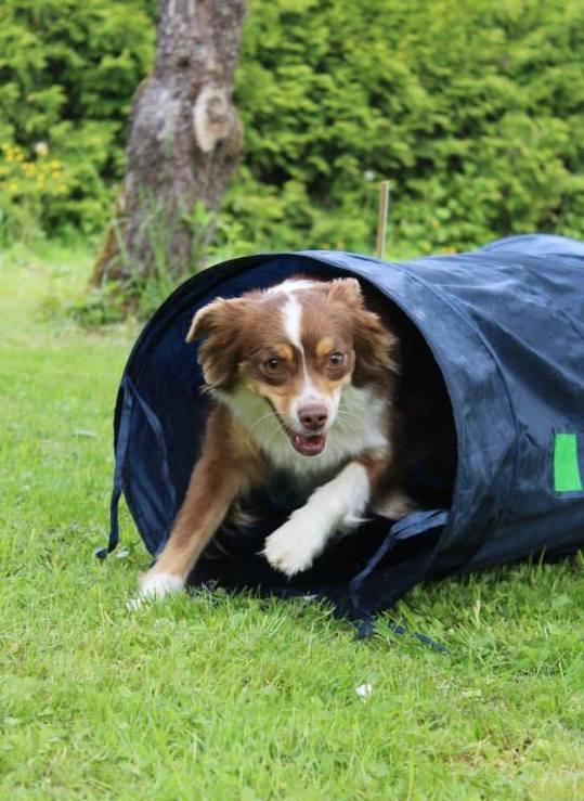 chien agility ostéopathie